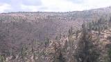 Ministrul Pădurilor, sub tirul întrebărilor la TVR Cluj!