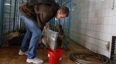 Eugen Rusu, voluntar la un adăpost de câini fără stăpân