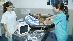 SĂNĂTATE: Cum îngrijim animalele de companie în izolare?