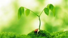 Natura, sursă de sănătate - condiţia să avem grijă de ea, la