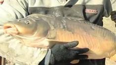 """Pescuit la complexul piscicol de la Periş, duminică, la """"Pescar hoinar"""""""