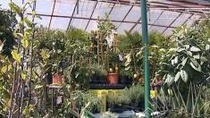 Plante ornamentale la Economica