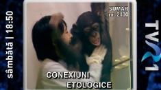 Conexiuni etologice - maimuțele, sâmbătă, la Teleenciclopedia