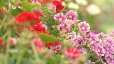 Despre producerea și comercializarea florilor la