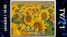 """Bufniţe, floarea-soarelui şi Insula Paştelui, sâmbătă la """"Teleenciclopedia"""""""