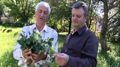 """Despre aurul ascuns al plantelor medicinale, duminică la """"Natură şi sănătate"""""""