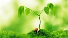 Afaceri inspirate din natură, la TVR Internaţional