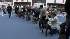 Concurs canin internaţional