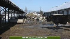 Satul: Ferma de vaci europeană