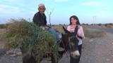 Plantaţii de argan Maroc