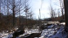 Gândeşte verde: S.O.S. Pădurile (II)
