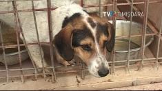 Chiar şi câinii de rasă sunt abandonaţi de stăpâni