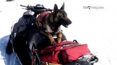 Prima unitate canină de intervenţie la avalanşă 100% românească