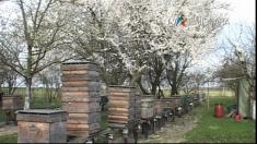 20 de generaţii de apicultori într-un sat din Banat