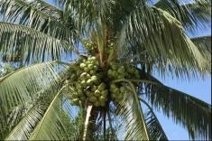 Despre cocotieri şi crustacee, într-o nouă lecţie a Teleenciclopediei
