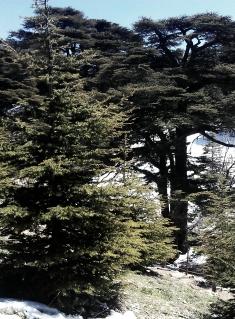 (w235) Liban