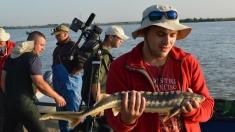 """La """"Pescar hoinar"""" vă arătăm cea mai nouă campanie de salvare a peştilor Dunării"""