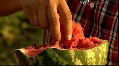 Război între lubenița de Gottlob și pepenele de Dăbuleni!