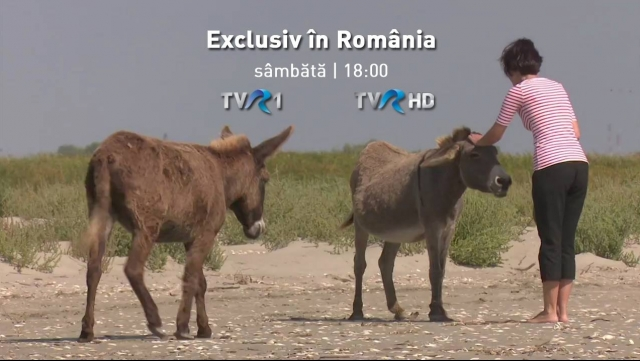 Exclusiv in Romania