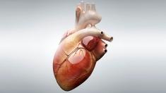 Dincolo de viitor: Probleme... de inimă