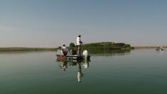 Pe Valea Argovei, în căutarea celor mai mari bibani şi şalăi