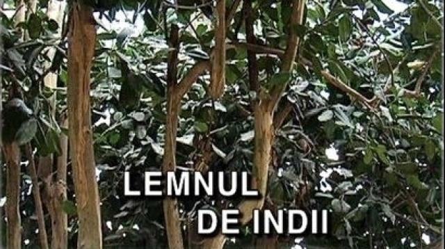 Lemnul de Indii