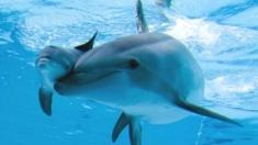 Delfini, cai şi alte frumuseţi ale lumii, la Teleenciclopedia
