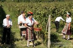 """""""Bun îi vinul""""... de Ostrov"""