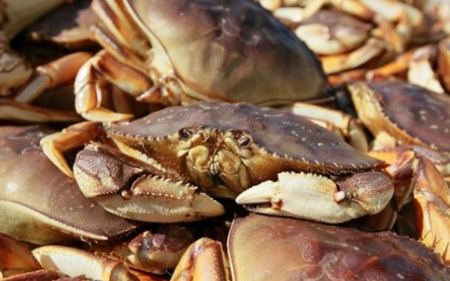 (w640) Crustacee