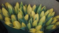 """Universul florilor din """"grădina Danei"""