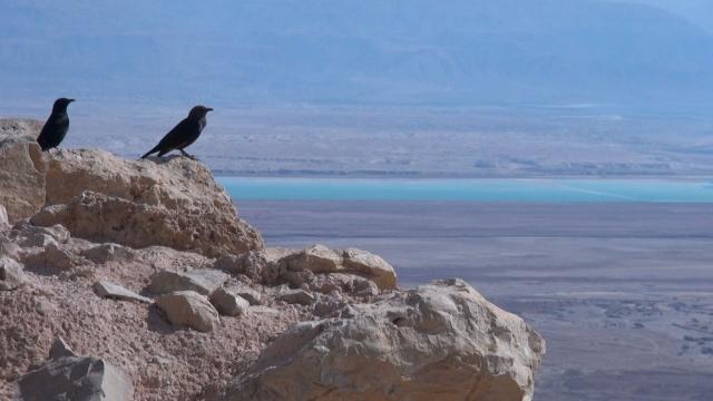 Marea Moartă 3