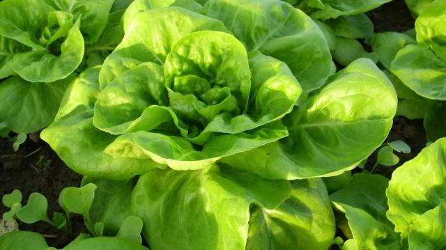 (w640) salata