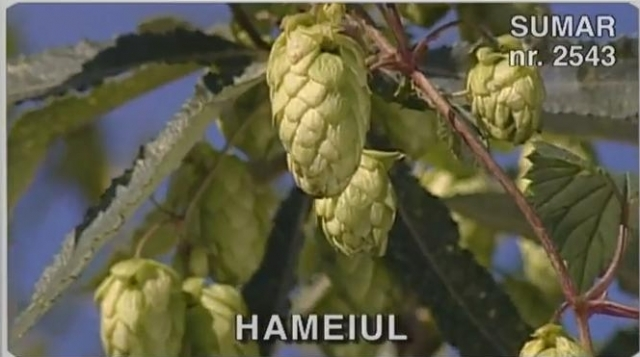(w640) Hameiul