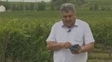 Viticultura, investiție sigură?