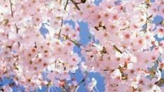 Vin Floriile cu soare la IERI-AZI-MÂINE