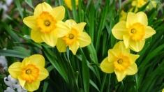 CULT@rt: Postul Paştelui, semnificaţii şi pregătiri