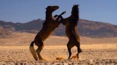 Caii namibieni şi Odiseea vulcanilor, documentare la Teleenciclopedia