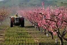 Investiţiile în agricultură pe agenda autorităţilor