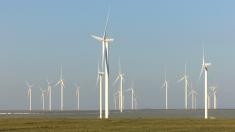 """La """"Dosar România"""", despre cel mai mare parc eolian din Europa"""