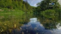 Dunărea şi anotimpurile, la Teleenciclopedia