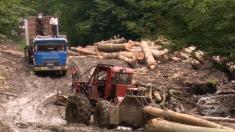 Cum dispar pădurile virgine ale României, luni la Dosar România