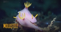 Lumea moluştelor, la Teleenciclopedia
