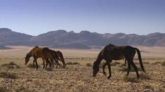 Povestea cailor namibieni, la Teleenciclopedia