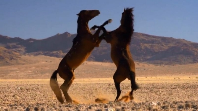 caii namibieni