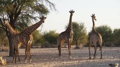 Regatul sălbatic - expediții în Africa de Sud