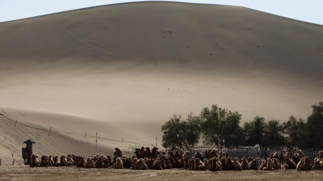 Desertul Gobi