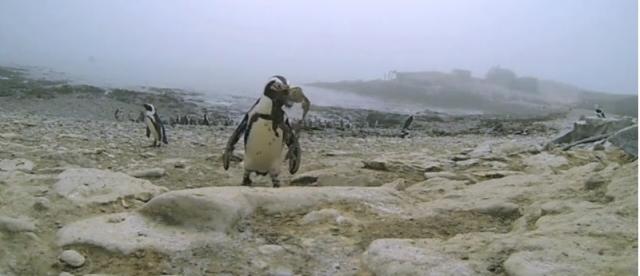 (w640) Pinguini T
