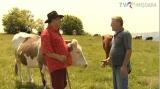 Măsuratul vacilor: bătutul untului și rețeta cașului proaspăt | VIDEO