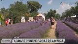 Plimbare printre florile de lavandă | VIDEO