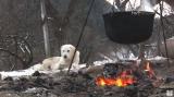Povestea ultimului cioban care a fost în transhumanță | VIDEO